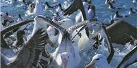 Albatross Encounter Tours