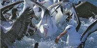 Dolphin Encounter and Albatross Encounter Tours